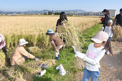 【季節誌しずく・三河自家製滴楽部】おむすびSTAND~稲刈りもできるんだなぁ~